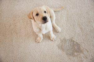 Mansfield TX Carpet Cleaning (1)